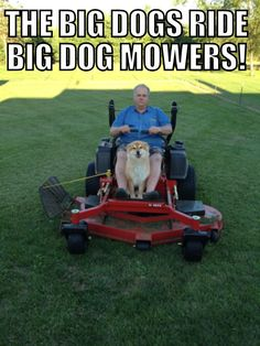 The Big Dogs ride Big Dog Mowers! Zero Turn Lawn Mowers, Landscaping Equipment, Tractor Implements, Truck Repair, Riding Mower, Trailers For Sale, Big Dogs, Tractors, Outdoor Power Equipment