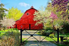 Flowering trees and a beautiful red barn. So pretty!  // Great Gardens & Ideas //