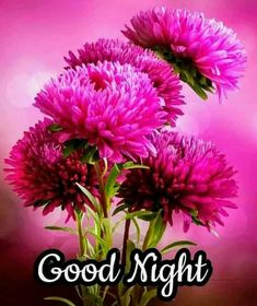 We send good night images to our friends before sleeping at night. If you are also searching for Good Night Images and Good Night Quotes. Photos Of Good Night, Good Morning Beautiful Pictures, Good Night I Love You, Romantic Good Night, Good Night Love Images, Good Night Prayer, Good Night Friends, Good Night Blessings, Good Night Gif