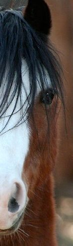 Beautiful fuzzy horse face, such a pretty horse eye, love it!