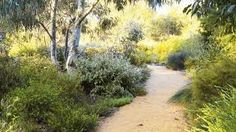 natural dry creek bed and tropical landscape design