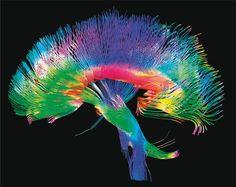 Neuronal conectivity (Sebastian Seungs connectome)