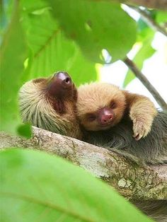 Sloths Who Do Not Have Time for You - REST ASSURED - Exotic Animals & Pets, Pet Photo Special : People.com