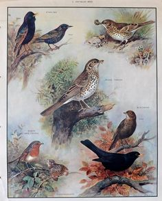 Your place to buy and sell all things handmade Vintage Artwork, Vintage Illustrations, British Schools, Nature Posters, British Wildlife, School Posters, Bird Design, Bird Feathers, Poster Wall