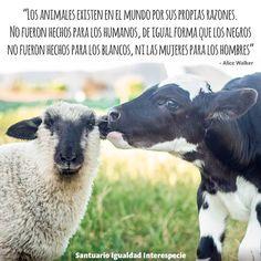 Respetar a los animales parte por entender que no son nuestros :)