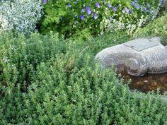 17 Low-Maintenance Plants and Dwarf Shrubs Low Maintenance Landscaping, Low Maintenance Plants, Backyard Landscaping, Landscaping Ideas, Sloped Backyard, Backyard Patio, Front Garden Landscape, Garden Shrubs, Landscape Design