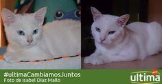Etapas de vida gato | ultima de Affinity