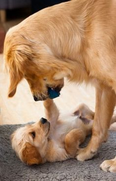 maman chien et son chiot - Animals Dogs & Cats /HUNDE & Katzen - Cute Puppies, Cute Dogs, Dogs And Puppies, Doggies, 15 Dogs, Cute Baby Animals, Funny Animals, Funny Cats, Wild Animals