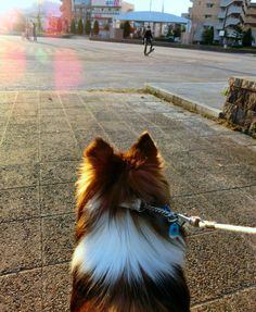 http://ameblo.jp/sheltie-pome-diary/day-20161127.html
