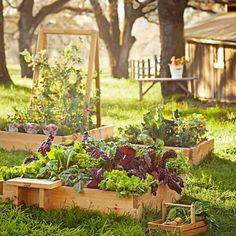 How to Start Seeds Outdoors | Williams-Sonoma Taste