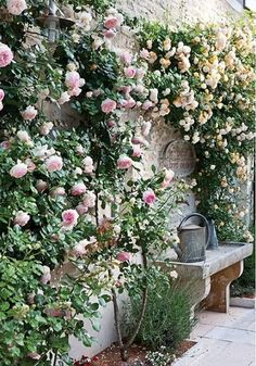 Climbing Roses on House Ideas_12