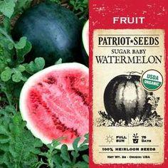 Santa Maria Melon Organically Grown Packs of 15 Seeds