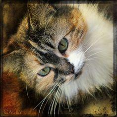 Cally | Flickr - Photo Sharing!