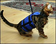 Espens marble Bengal in her cat walking jacket, a unique soft sided security harness especially for cats and kittens of all sizes!