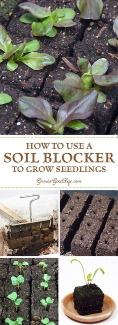 One of the benefits of using soil blocks to grow seedlings is it eliminates the need for plastic cell packs or peat pots. The soil block functions as both the container and the soil for starting and growing seedlings. Farm Gardens, Outdoor Gardens, Beach Gardens, Gardening For Beginners, Gardening Tips, Gardening Books, Gardening Supplies, Growing Seedlings, Growing Veggies