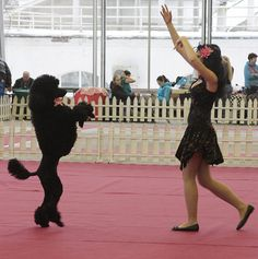 K9 Freestyle Dance Competitions at Derzhava 2012