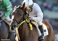 San Onofre (USA) 2010-2016 B.g. (Surf Cat (USA)-Marrakech Gold (USA) by Native Regent (CAN) 1st Midnight Lute S (USA-G3,6.5fD,Santa Anita), Los Angeles S (USA-G3,5.5fD,Los Alamitos) (photo: Benoit)
