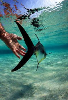 Belize Flats Fishing, Belize Scuba Diving and Belize Eco Tour resort Sea Fishing, Sport Fishing, Gone Fishing, Kayak Fishing, Fishing Boats, Fishing Stuff, Saltwater Flies, Saltwater Fishing, Belize Vacations