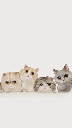 Ideas Cats Wallpaper Iphone Pictures For 2019 - Cats - Cat Wallpaper Wallpaper Gatos, Iphone Wallpaper Cat, Tier Wallpaper, Cute Cat Wallpaper, Animal Wallpaper, Wallpaper Ideas, Seagrass Wallpaper, Paintable Wallpaper, Colorful Wallpaper