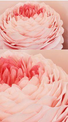 tiffanie turner's GIANT paper flowers <3