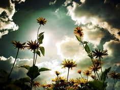 flowers and clouds.....