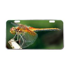 """11.8"""" X 6.1"""" Fashion Dragonfly Dream License Plate with License Plate for Car Made from Aluminum Silver Trim -- Awesome products selected by Anna Churchill"""