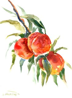 Peaches fruit Painting original watercolor 12 x 9 by ORIGINALONLY