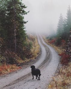 Road to nowhere. Finland, Landscapes, Country Roads, Photography, Paisajes, Scenery, Photograph, Photo Shoot, Fotografie