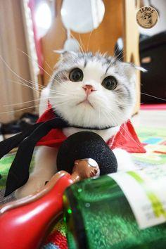 오늘의유머 - 고양이 코카콜라 제로입니다 11