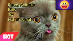 Funny Animals Fails 10   Try Not To Laugh Challenge   Compilation Vines