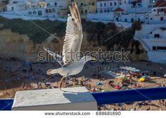 Seagull flies over the beach in Carvoeiro, Algarve, Portugal