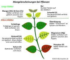 Mangelerscheinungen bei Pflanzen erkennen