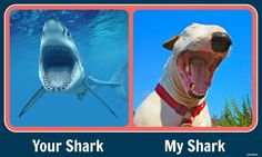 This is hilarious... we compare Rukus to a shark all the time!