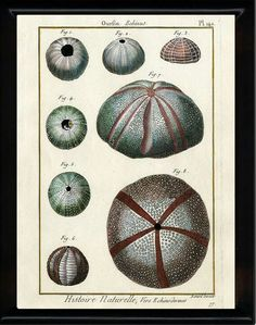 Your place to buy and sell all things handmade Shell Animals, Natural Form Art, Coral Print, Antique Illustration, Free Prints, Botanical Prints, Natural History, Vintage Prints, Decoration