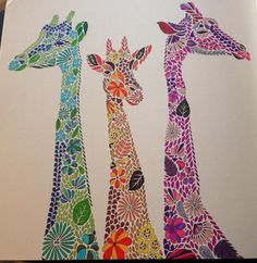 Millie Marotta's Animal Kingdom - A Colouring Book Adventure: Amazon.co.uk: Millie Marotta: 9781849941679: Books