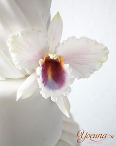 {Wonderful Cattleya Orchid colored pearl white with a dark throat by Yolanda Cueto - Yocuna Arte en Azúcar}