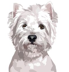 West Higlhand white Terrier dog decal sticker set of 2 image 2 West Terrier, West Highland Terrier, Terrier Dogs, Terriers, Terrier Mix, Animal Paintings, Animal Drawings, Pop Art, Dog Illustration
