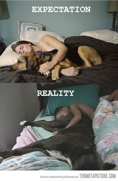 Sleeping with dogs…