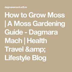 How to Grow Moss   A Moss Gardening Guide - Dagmara Mach   Health Travel & Lifestyle Blog