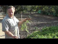 Pestujeme mrkvu - YouTube