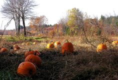 """""""The Last Pumpkins"""" by Muffet on sytes.org"""