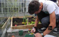 Während einer ABU-Lektion wurden dann die verschiedenen Salate und das Gemüse gepflanzt und beschriftet.