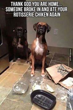 Thank goodness your home. Boxer puppy