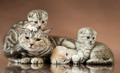 Jaką rasę kotów wybrać?