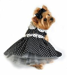 Black and White Polka Dot and Tulle Dog Dress