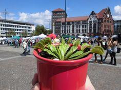Beim Vegan Street Day in Dortmund