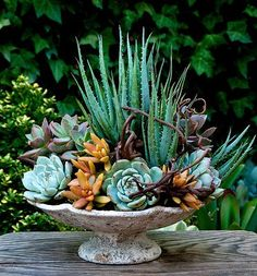 The Succulent Perch Designing With Succulents in San Diego CA