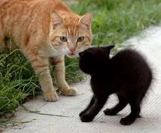 черная кошка и рыжий кот.