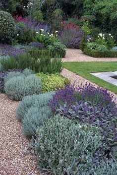 full sun, low maintenance, drought tolerant plants. Lavender, Sage and Rosemary