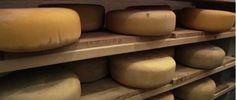 My Serra Cheese